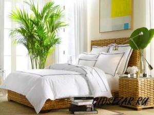 Комнатные растения. Растения в спальне: покой и уют