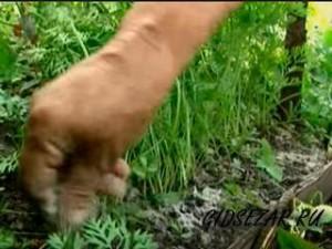 Подкормка моркови натуральными средствами