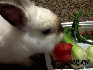 Подберите кролику правильную диету